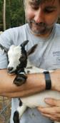 Leonard Nigerian buckling goat.jpg