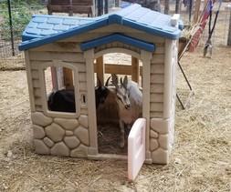 goat toys hooves toga.jpg