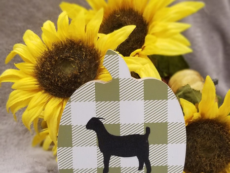 Anyone wanting to add some goats to your fall decor?