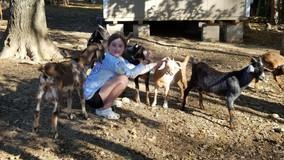 Baby Goat Playdates