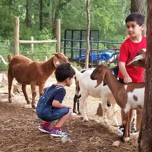 Schedule a Goat Play Date!