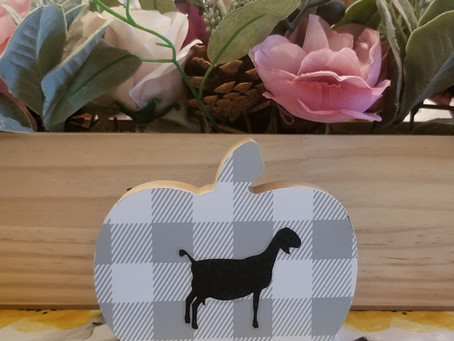 Do you want to add some fall Goat Decor? Look at this cute fall pumpkin with a Mini Nubian Goat.