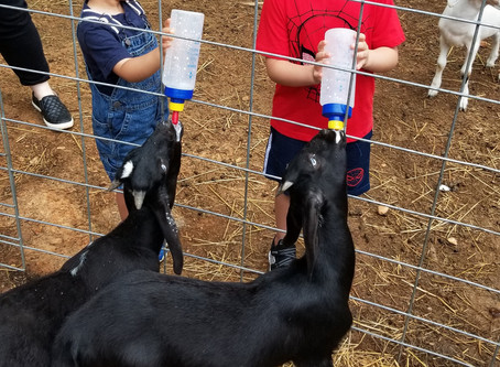 Private baby goat play date available Saturday @ 8 am with bottle feeding!