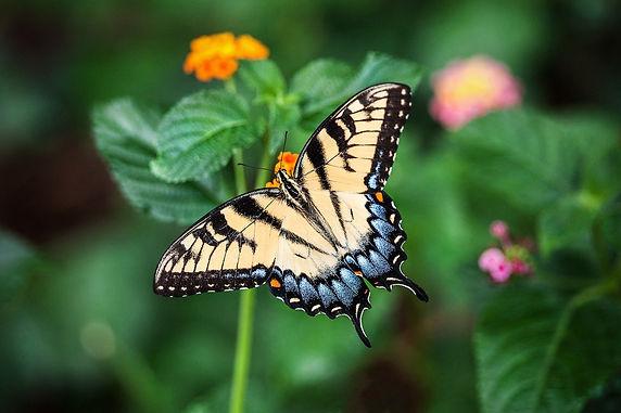 butterfly-1391809_1280.jpg
