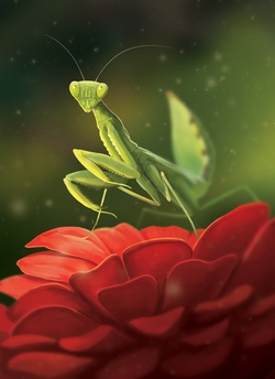 PrayingMantis_Final