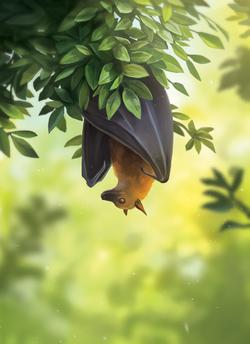 Bat_Final