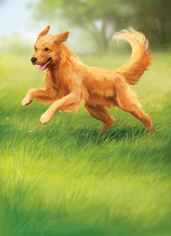 Dog_Final