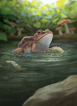 Toad_Final