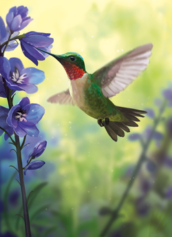 Hummingbird_Final