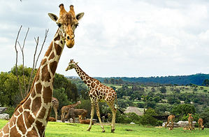 Africam Safari.jpg