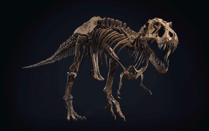 t-rex-stan.jpg