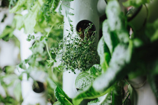 Fine herbs, flowers and vegetables