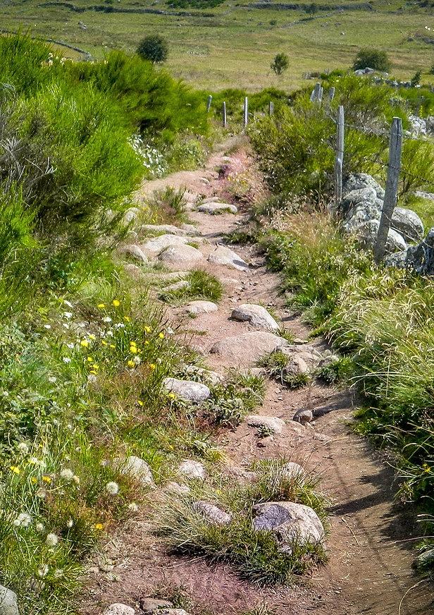 path-1459027_1920.jpg