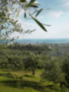 Ne-vo Olivenöl Anbaugebiet