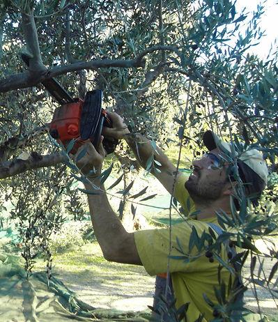 Der Baum-Beschneider