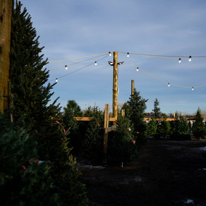 Holidays at Creekside Tree Nursery