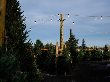 Holidays at Creekside Tree Nursery