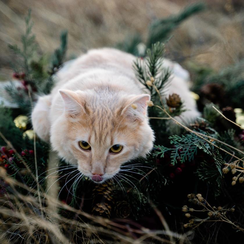 boulder-colorado-cat-photographer