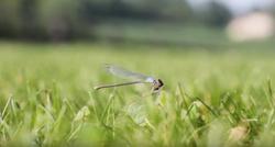 """""""Dragon Fly"""" Short Film"""