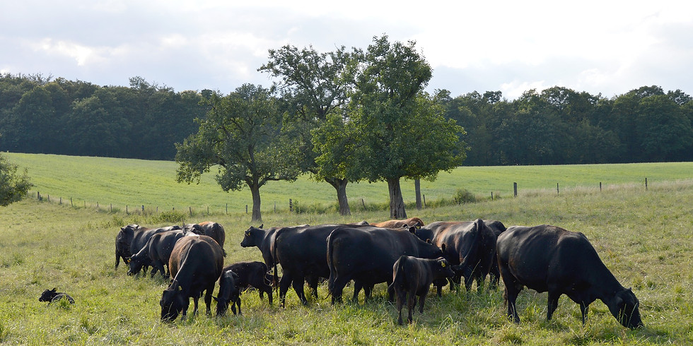 Maryland Beef Producer's Short Course Series III - Eastern Shore