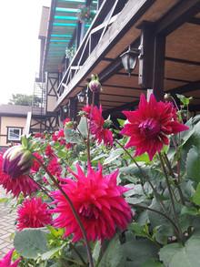 дворик у террасы