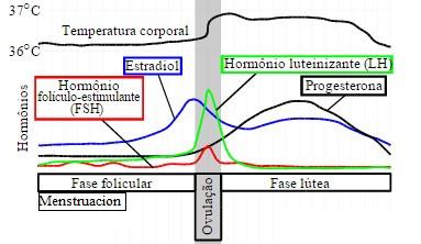 Variación hormonal y temperatura en un ciclo