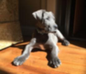 Finn Puppy w couch.JPG