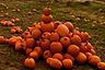 Stack of harvested orange pumpkins.