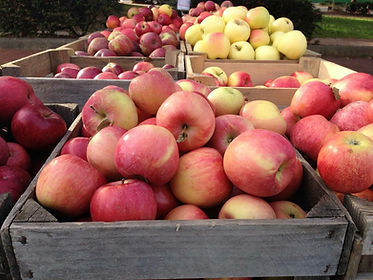 Several apple varieties picked into crateds, fresh from the orchard.
