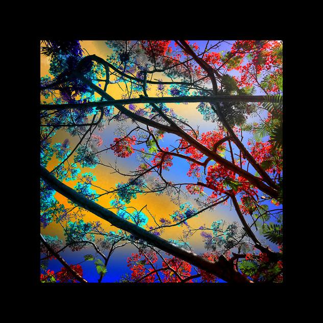 Caribbean colour tree