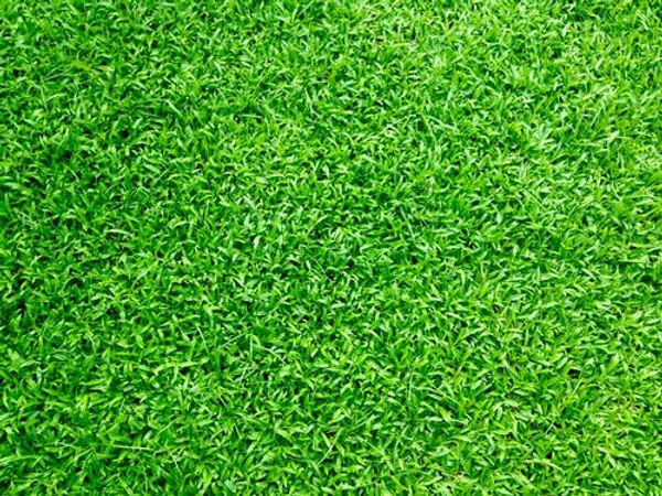grass 10.jpeg