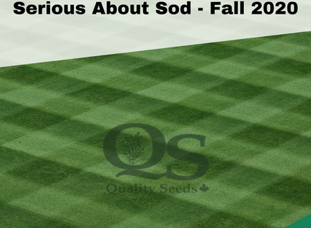 Serious About Sod Fall 2020
