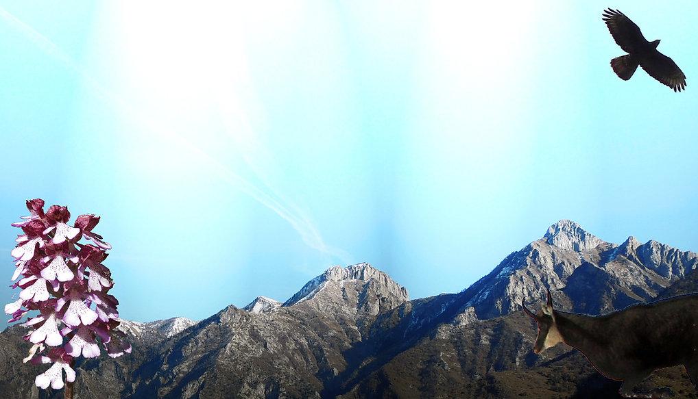 Accompagnateur en montagne en Roya-Mercantour, animations nature, sorties naturaliste, balades faciles, parcours aventure, raquettes, trekking