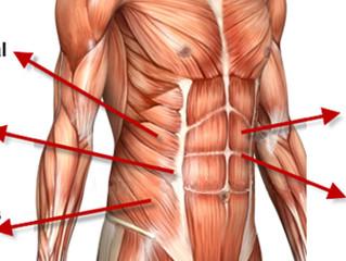 Veckans Hälsotips - stärk din coremuskulatur med Weellnessgruppens enkla program...