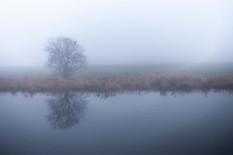Fog on the River Forth. #scotland #scott