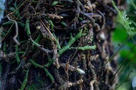 Botanical III #botanical #photographer #