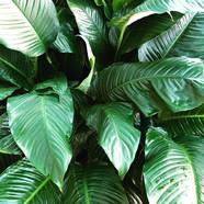 Botanical II  #botanical #plantlife #for