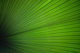 Botanical #botanical #palmtrees #palm #f