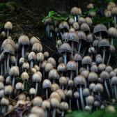 SHROOM. #mushrooms #mushrooms #scotland