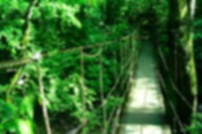 Canopy Adventure 2.jpg