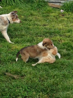Puppy_Play_.Time.jpg