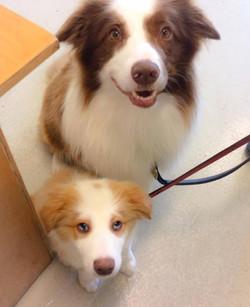 Previous puppies.