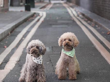 ASPCA Files Lawsuit on Behalf of Pet Leasing Victims
