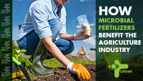 How Microbial Fertilizers Benefit Farmers