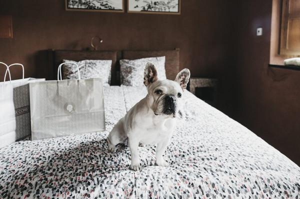 bulldog-francês-casamento.jpg