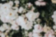 dex-ezekiel-791455-unsplash_edited.jpg