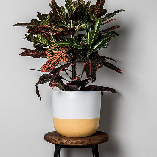 Duo Planter - By Becky Duffield