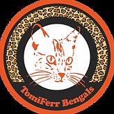 Gato Bengal - Gatil TomiFerr Bengals