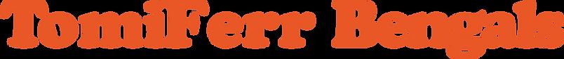Gatil TomiFerr - Gato Bengal