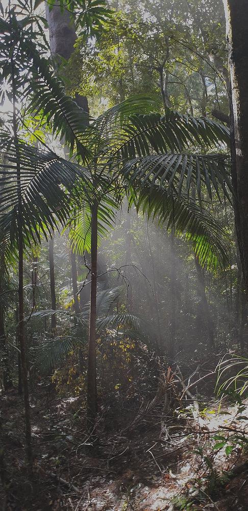 light through trees_edited.jpg